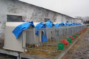 Домики для телят