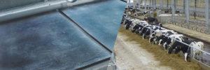 резиновые маты для коров