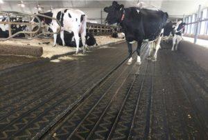 резиновый мат для скотопрогонов