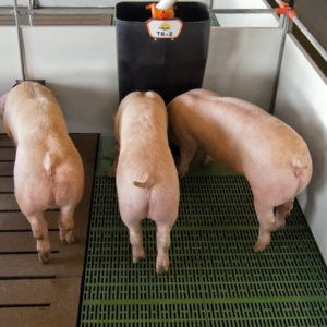 Бункерная кормушка для свиней на откорме TR-2
