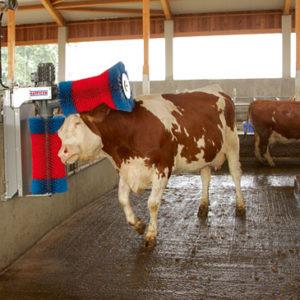 Автоматическая щетка чесалка для коров