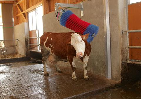 Автоматическая вертикальная щетка чесалка коров