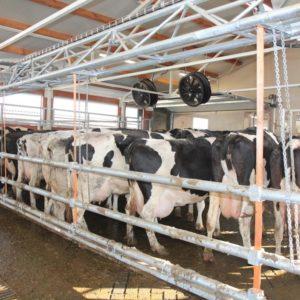 Автоматический подгонщик для коров
